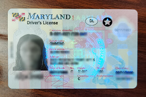 Order a fake Maryland Driver's License with scannable details